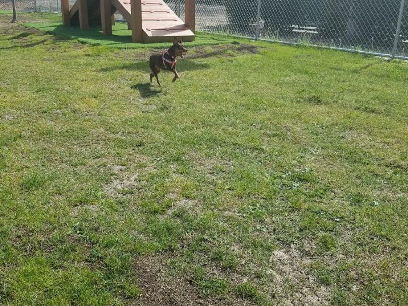 San Clemente Dog Park