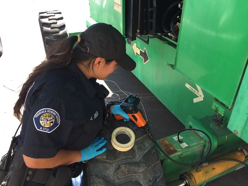 Tiny Kittens Rescued From Tight Spot In Redwood City