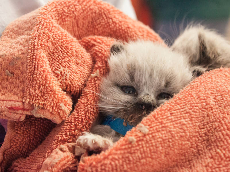 Kitten Nursery These 12 Photos Of Tiny Orphaned Kittens Rescued By Calif