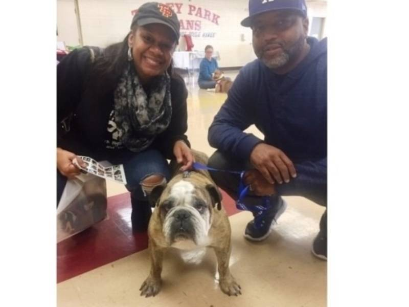 Tinley Park HS Teams Up with P.A.W.S. to Host Pet Adoption ...