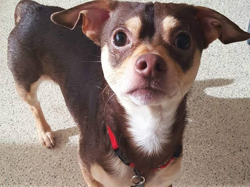 Dog At Animal Rescue League S Dedham Shelter Missing