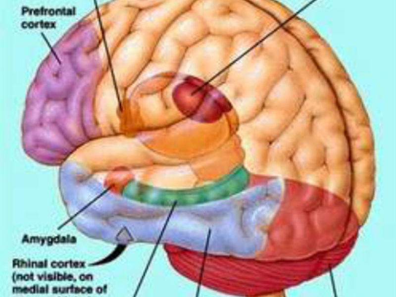 When Does The Brain Mature? | Wyandotte, MI Patch