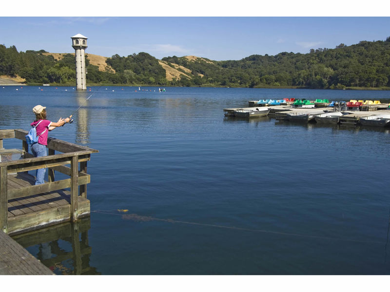 Fish contaminated with mercury and pcbs at east bay for Fish with least mercury
