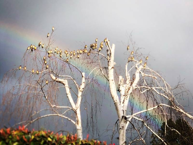 Rainbow Between Storms: Photo Of The Day