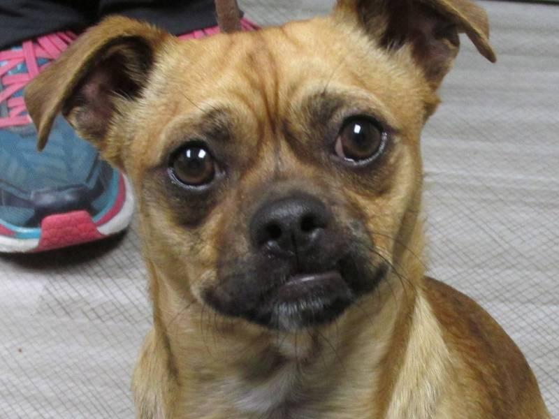 Rescue Dogs Danville