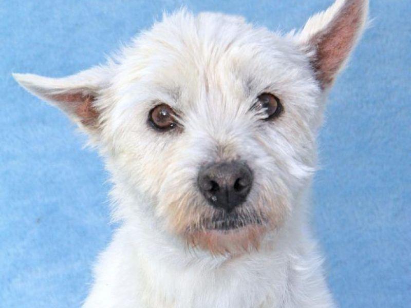 Dog Kennel Santee Ca