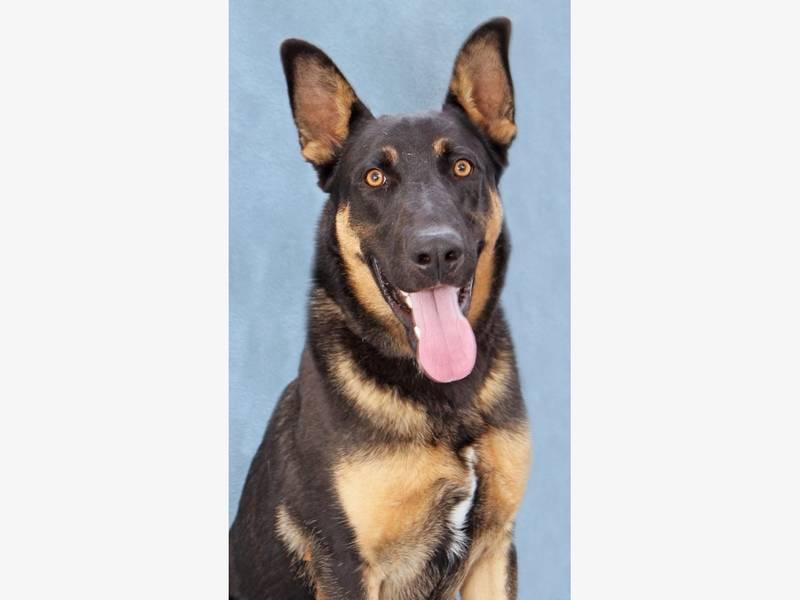 San Bruno Dog Training