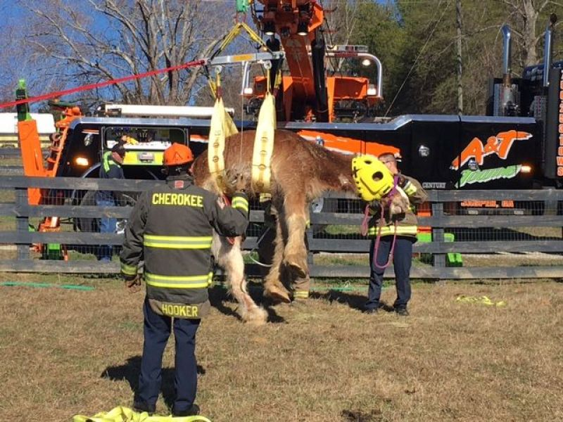 Roswell Recycling Center >> Horse Rescued After Falling Down Hill In Pickens County | Canton, GA Patch