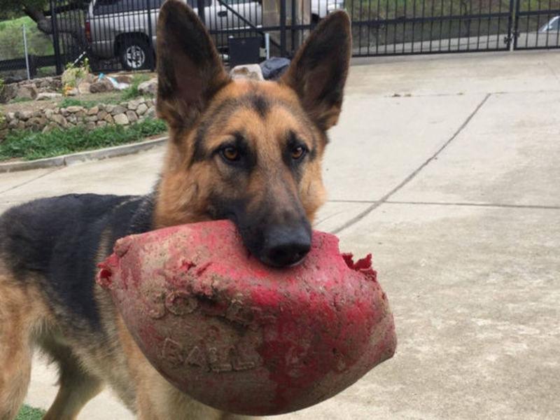 Hunt On For Scottie Dog Stolen During Bay Area Car Theft