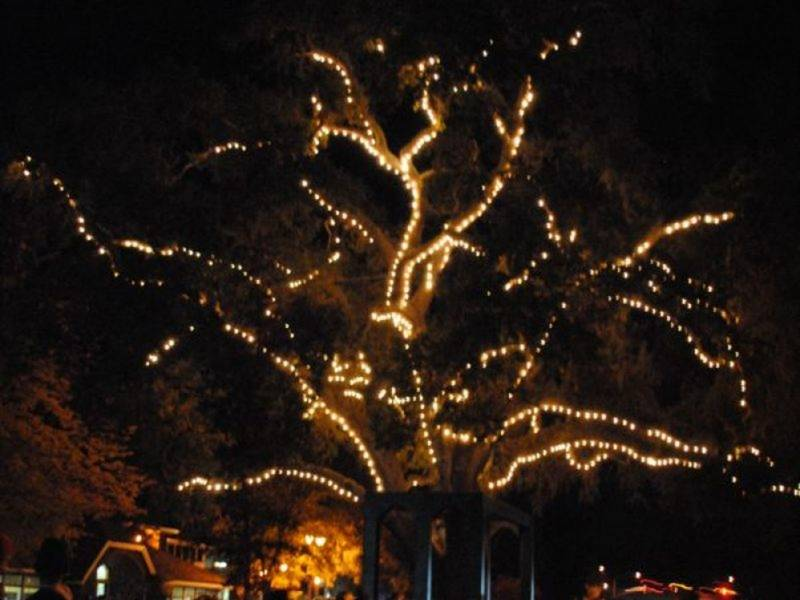 Danville Holiday Tree Lighting What To Know Before You Go  sc 1 st  Patch & Danville Holiday Tree Lighting: What To Know Before You Go ... azcodes.com