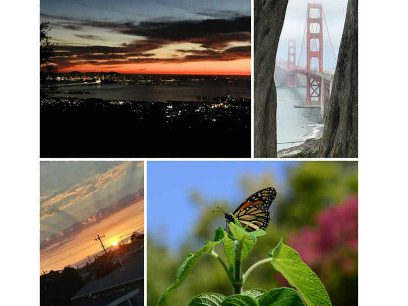 tree framed golden gate inky sky monarch pause ca in photos
