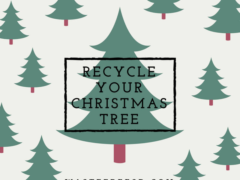 Responsibly Recycling a Christmas Tree is as Easy as 1, 2, Tree! San Diego  ... - Responsibly Recycling A Christmas Tree Is As Easy As 1, 2, Tree