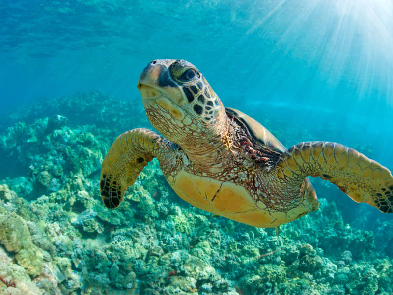 Sea Turtle Killed By Boat Strike 4th Incident This Summer