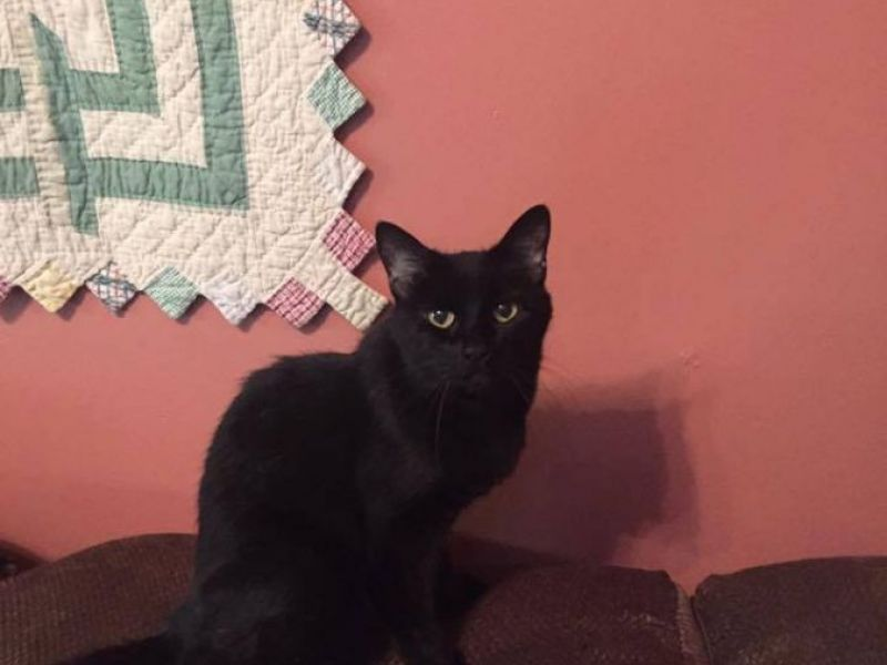 Cats In Urgent Need Of New Homes Middletown Animal