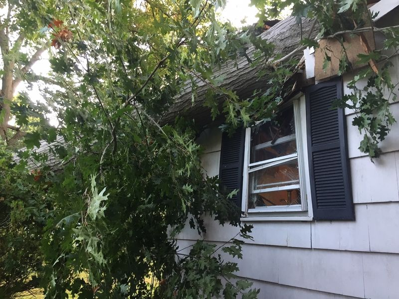 Image result for tree fallen on house
