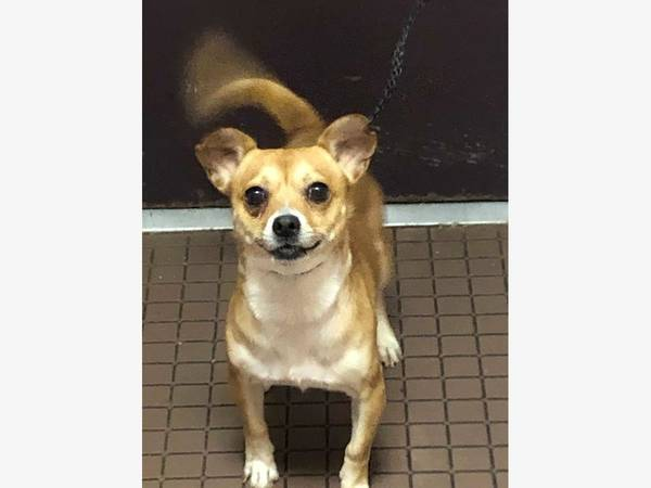 'Shy But Friendly' Dog Found Roaming In West Hartford
