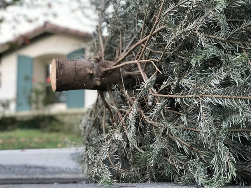 Christmas Trees, Leaf Bags & Holiday Trash Pickup ...