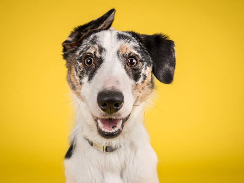 CT's 1st Indoor Dog Park Opens In West Hartford