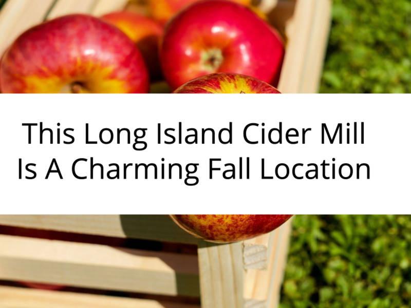Cider Donuts Long Island