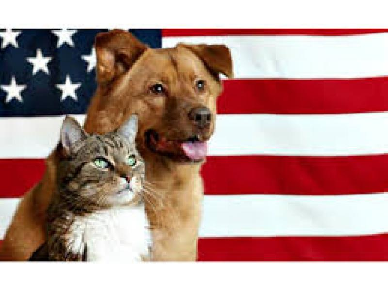 Keep Pets Safe This Fourth of July