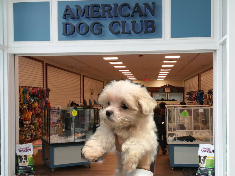 the puppy store