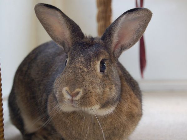 easter bunny sale ban in stamford irks pet store   stamford ct patch