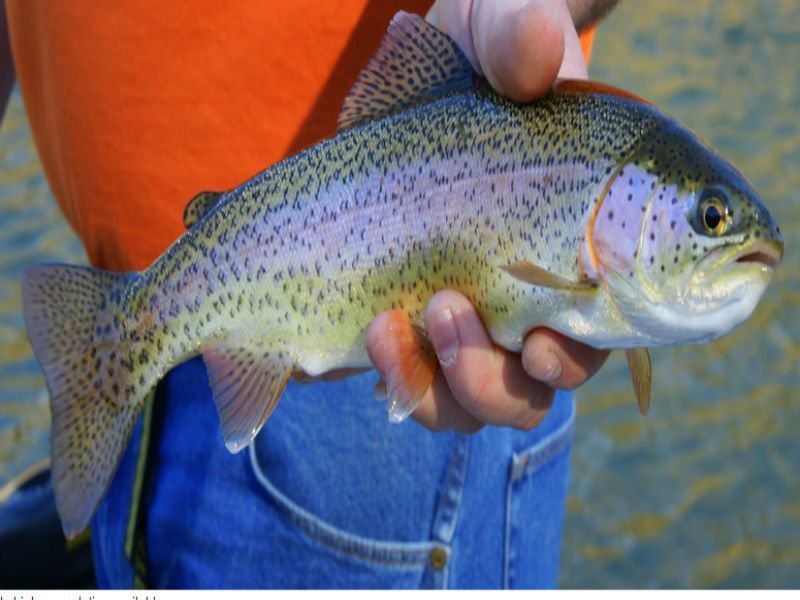 How to get a fishing license in illinois before trout for How to get a fishing license