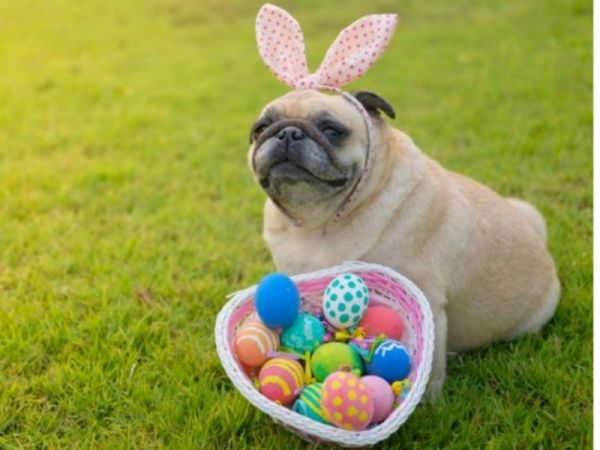 Dog Easter Egg Hunt Taking Place in Brown County