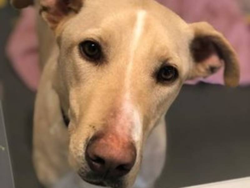 Morton Grove Pet Dog Rescue