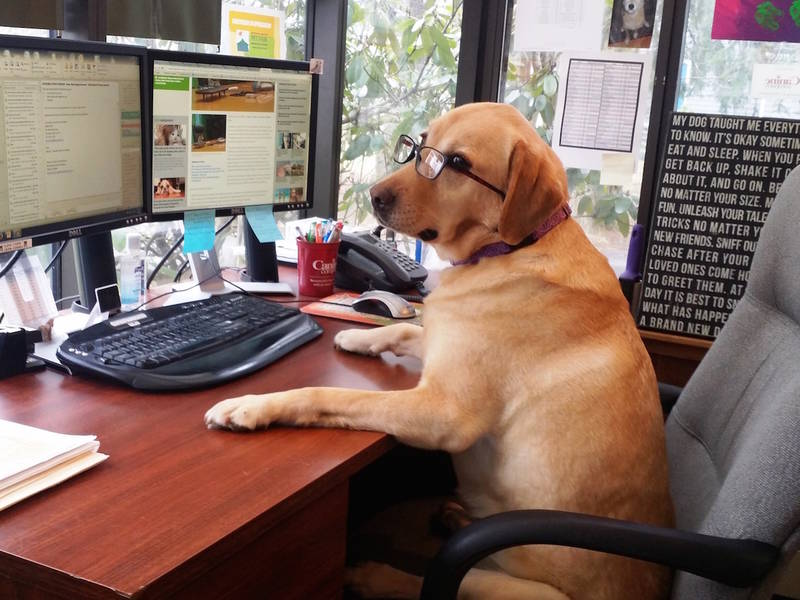 Some Dos And Don Ts For Bringing Your Dog To Work