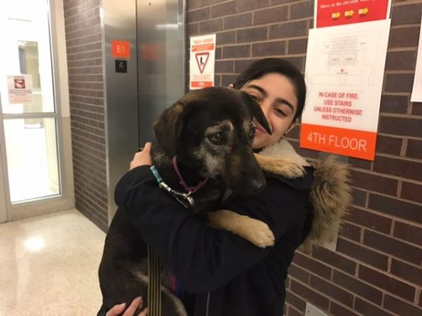 Port Authority officers rescue runaway shelter dog from Lincoln Tunnel