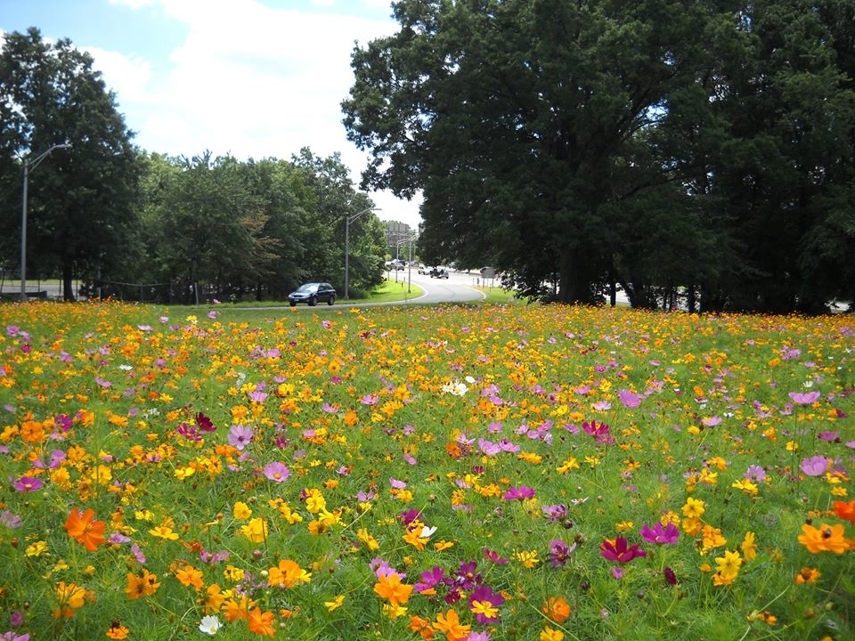 Garden State Parkway Wildflower Seeds Now Available In New Jersey ...