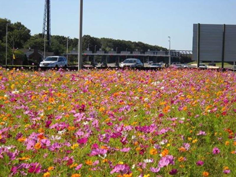 Garden State Parkway Wildflower Seeds Now Available In New Jersey