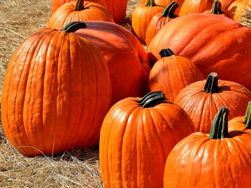 East Haven Police Issue Safety Tips for Halloween | East