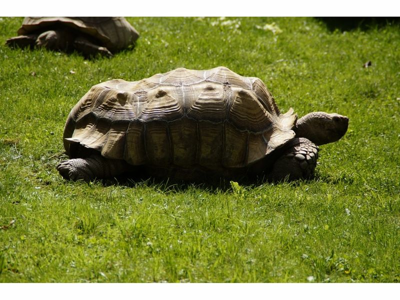 Tortoise Stolen From Queens Wildlife Center Found In Connecticut ...