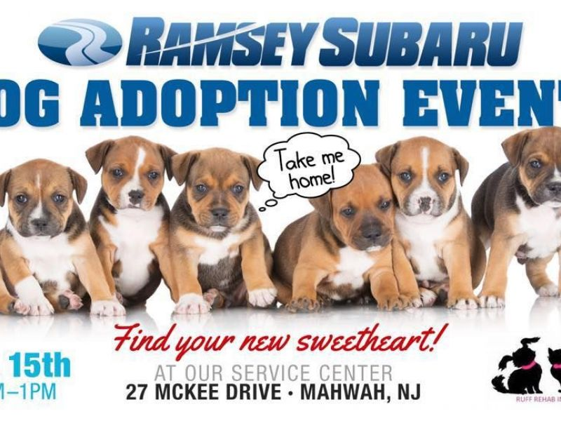 Service Dogs For Adoption In New Jersey