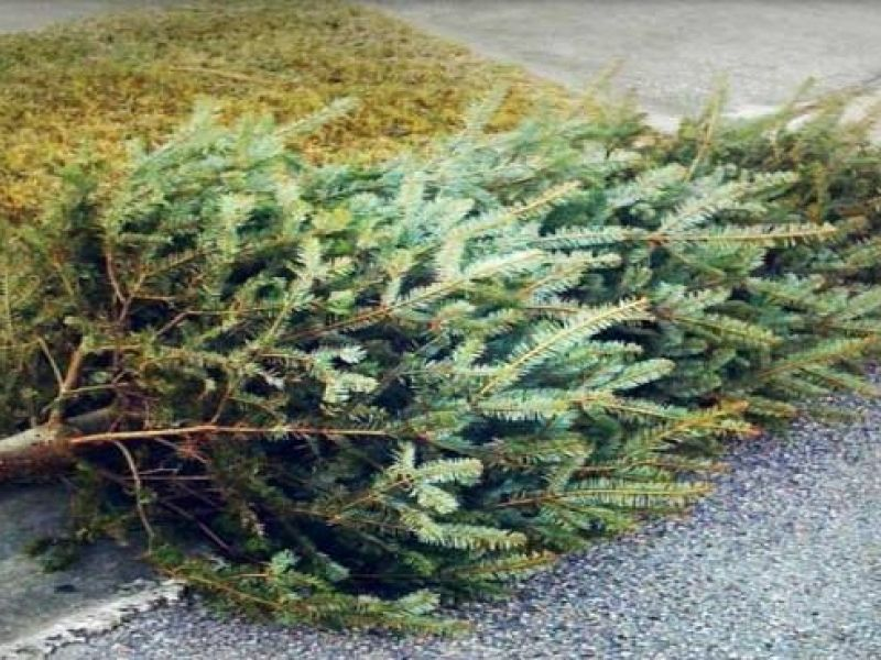 How to Dispose of Your Christmas Tree in Lansdale ...