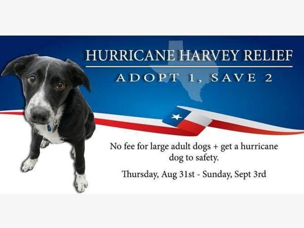 Dog Adoption Chester County Pa