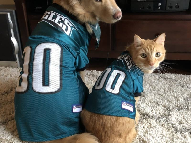 24 Eagles Dogs (And 1 Cat) To Get You Ready For The Super Bowl ... 4d8fad427