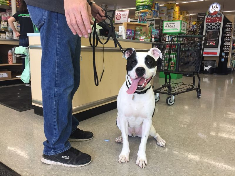 Pet supplies plus to host grand opening august 12 13 in edison pet supplies plus to host grand opening august 12 13 in edison solutioingenieria Images
