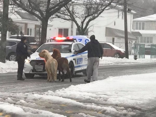 Cops corral 2 ponies in New York City during snowstorm