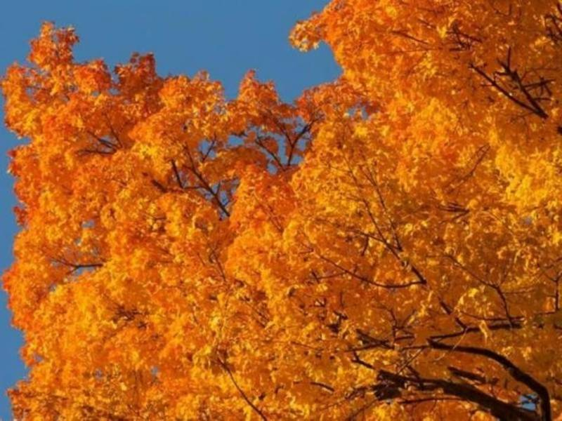 Look Forward To A Beautiful Thanksgiving Day In Metro Atlanta