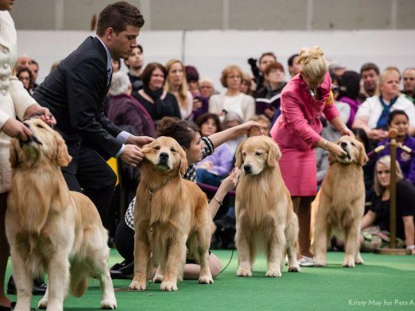 Westminster Dog Show Venue