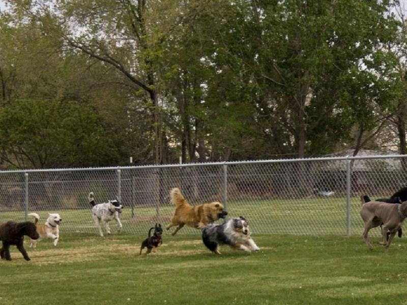 Dog Training Woodbridge Nj