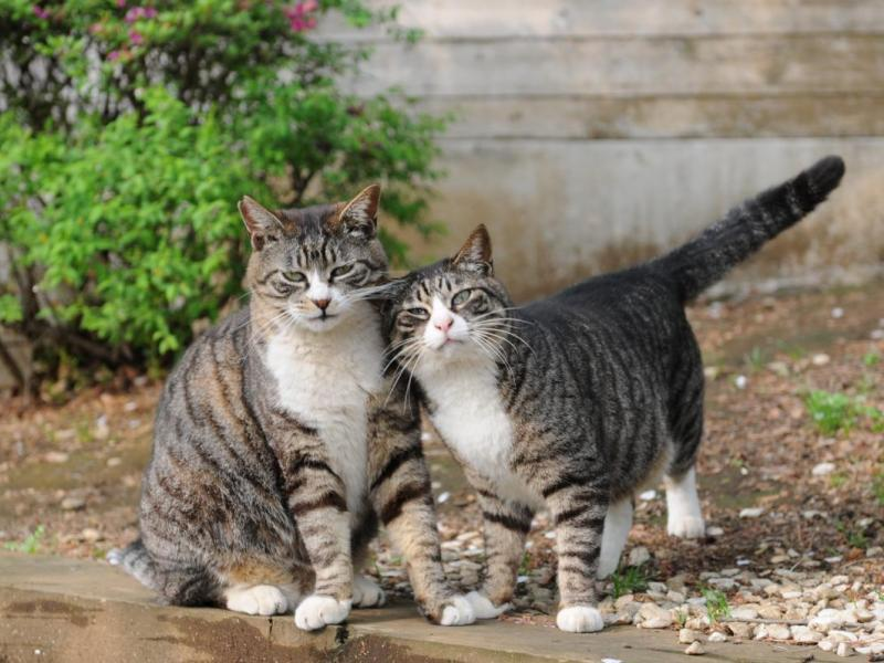 Someone Is Killing Cats With Antifreeze In Linden Cat Owner Says Woodbridge Nj Patch