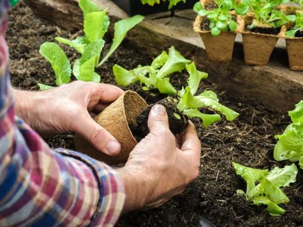 Let Rutgers Teach You How to Become a Master Gardener Woodbridge