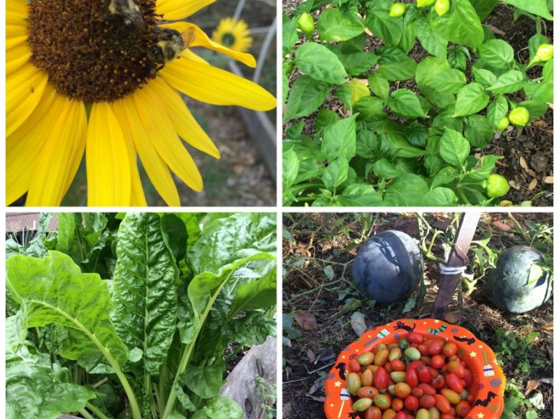 Union County Community Garden Grants Available   Summit, NJ Patch