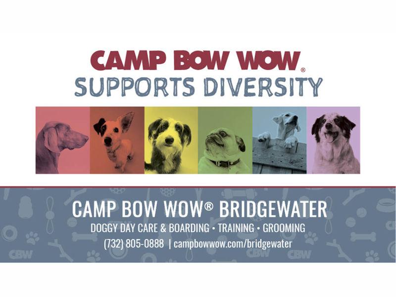 Dogs Day Care Hillsborough Nj