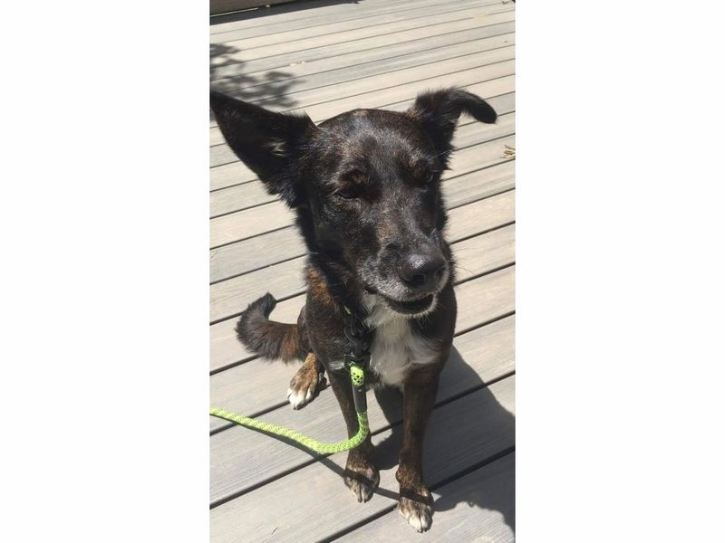 Best Friend Dog And Adoption Cranford
