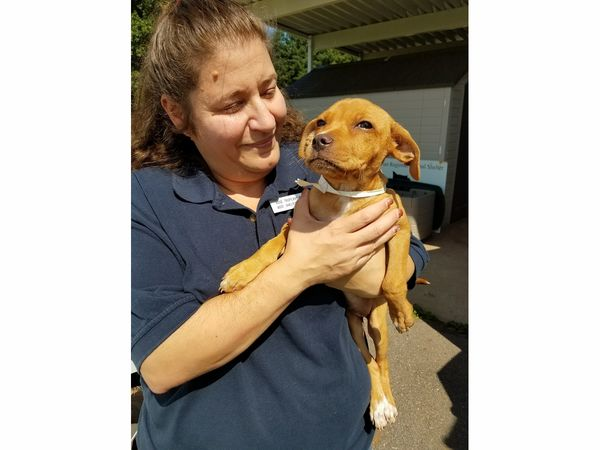 ... 8 Texas Dogs Arrive In Bridgewater, Will Go Up For Adoption ...
